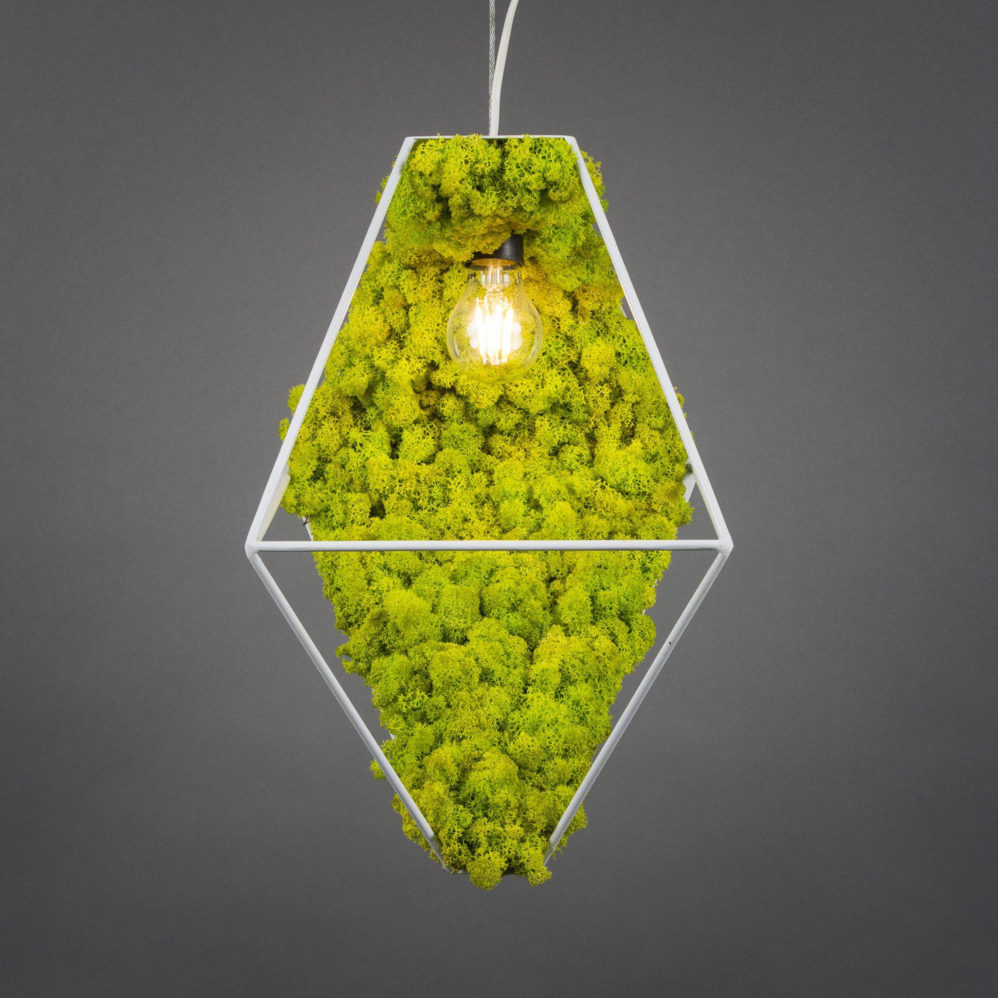 licheni-stabilizati-pe-corp-iluminat